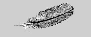 Relleno de plumas